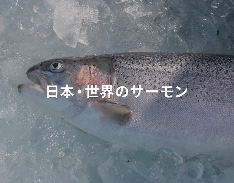 日本・世界のサーモン